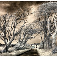 Country Lane-Arnold Hubbard-Sunderland-2