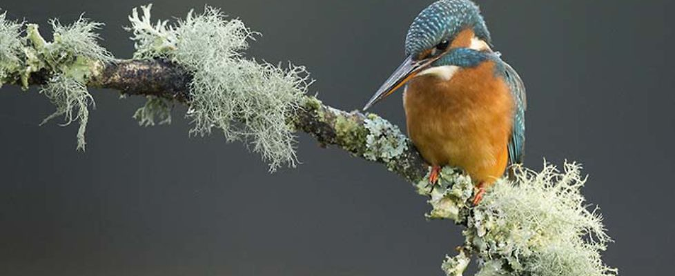 07 - Alcedo at his fishing