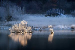 """The Chinese Bridge"" by Tony Marsh"
