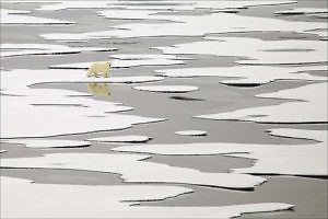 """Polar Bear On Ice"" by Keith Snell"
