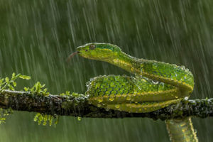 """Green Parrot Snake"" by Alan Walker"